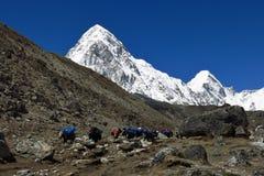 Der Yakwohnwagen, der von niedrigem Lager und von Schnee Everest kommt, bedeckte Pumo Ri Stockfotos