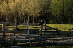 Der Zaun, auf dem zwei Raben sitzen Sie Stockfotos