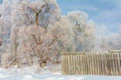 Der Zaun nahe bei dem Baum im Winter, ein sonniger Wintertag stockfotos