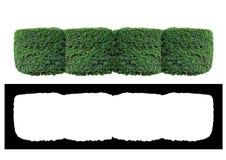 Der Zaun von Büschen Stockfotografie