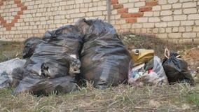 Der zerrissene Abfall sackt das Paket ein und bereitet grüne Behälterumweltverschmutzung draußen auf stock video