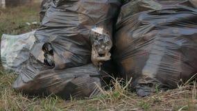 Der zerrissene Abfall sackt das Paket ein und bereitet grüne Umweltverschmutzung des Behälters draußen auf stock video footage