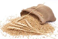 Der zerstreute Beutel mit Weizen Lizenzfreie Stockbilder
