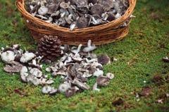 Der zerstreute Korb mit Pilzen Lizenzfreies Stockbild