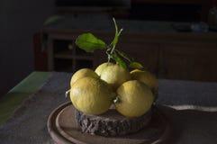 Der Zitronenbaum ist ein kleiner beständiger Obstbaum lizenzfreies stockfoto