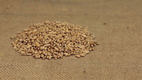 Der Zoom, nähernd ist ein Stapel von den Weizenkörnern, die auf Leinwand liegen Nahaufnahme stock video