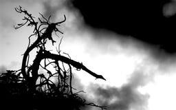 Der Zweig 1 Lizenzfreie Stockbilder