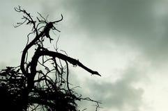 Der Zweig 2 Stockfotos
