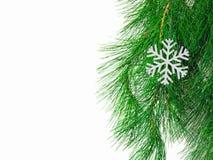 Der Zweig eines Weihnachtsbaums Stockfotografie