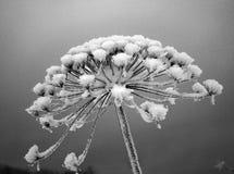 Der Zweig umfaßt durch Hoarfrost Lizenzfreie Stockfotos