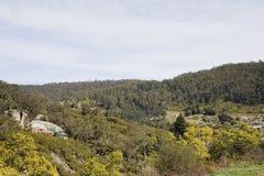 Derby-Landschaft Tasmanien stockfotografie
