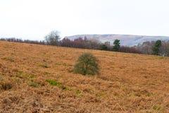 Derbyshire łąka z drzewem w centre Obraz Stock