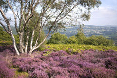 Derbyshire Landscape – Purple Heather Stock Photo