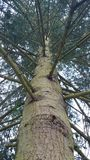 Derbyshire Pine. A different viewpoint of the Derbyshire countryside Royalty Free Stock Image