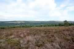 Derbyshire wrzos dalej cumuje ziemię Fotografia Royalty Free