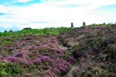 Derbyshire wrzos z bramy poczta w tle Zdjęcie Royalty Free