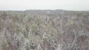 Derecho abajo de color de desplazamiento del toldo de bosque del otoño de la opinión del abejón metrajes