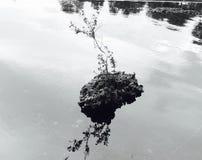 Derecho encima de la roca Fotografía de archivo