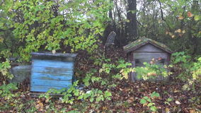 Derelict beehives in old  garden and autumn spiderweb. Derelict beehives in old farm garden and autumn spiderweb stock video footage
