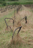 Derelict Grape Vines Royalty Free Stock Photography