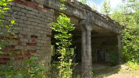 Derelict house walls overgrown with trees and plants. Static shot stock footage