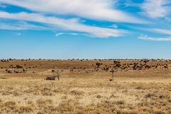 A Rural New Mexico Landscape. A derelict hut in a field, in rural New Mexico stock images