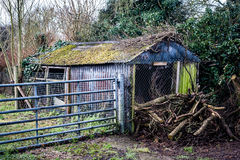 Derelict shed. Old garden shed in need of repair with small log pile Stock Photos