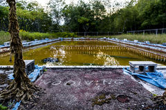 Derelict Swimming Pool with No Diving Sign - Abandoned Resort in Catskill Mountains. A late evening view of a derelict swimming pool with a No Diving sign Stock Photos