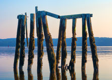 Derelict wood pilings on salt water river Stock Photography