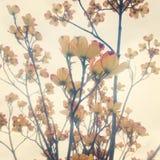 Dereni kwiaty Zdjęcia Stock