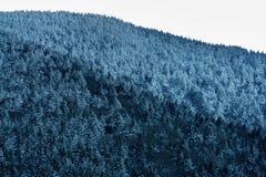 Dereszowata góra obrazy stock