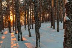 Derivas de la nieve en el bosque del invierno Fotos de archivo