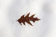 Derivas de la nieve, primer Fotografía de archivo libre de regalías