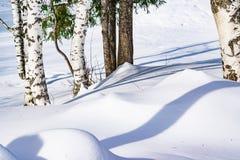 Derivas de la nieve resumidas después de nevada en un bosque natural del abedul con las sombras grandes de los árboles iluminados Foto de archivo libre de regalías
