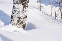 Derivas de la nieve resumidas después de nevada en un bosque natural del abedul con las sombras grandes de los árboles iluminados Foto de archivo