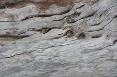 Derive el detalle de madera del registro en una playa 2 de Oregon Imagen de archivo