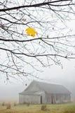 Dernière feuille d'érable sur un arbre photo libre de droits