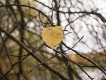 Dernière feuille d'automne sur un arbre avec le fond unfocused Photos libres de droits