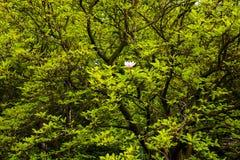 Dernière magnolia Photographie stock