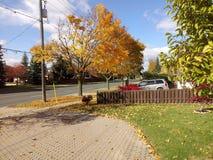 Dernières feuilles s'accrochant sur l'arbre Photo libre de droits
