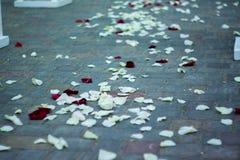 Derramado con la pista de los pétalos color de rosa Imagen de archivo libre de regalías