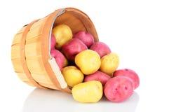 Derramamento da cesta das batatas vermelhas e brancas fotografia de stock royalty free