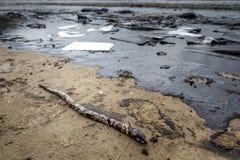 Derramamento de óleo na praia Fotografia de Stock Royalty Free
