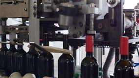 Derramamento do vinho do álcool nas garrafas de vidro na planta Correia transportadora com garrafas de vidro O processo de produç vídeos de arquivo