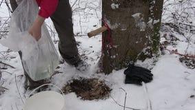Derrame a primeira seiva do bordo na mola após a queda de neve na cubeta filme