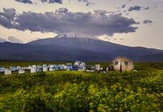 Derrière les abeilles de miel de fleurs et la tente naturelles d'agriculteur photos libres de droits