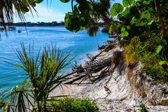 Derrière les feuilles de raisin de mer et les frondes de paume Photo libre de droits