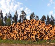 Derribado abre una sesión el bosque Foto de archivo libre de regalías