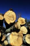 Derribado en los árboles forestales en un fondo del cielo Fotos de archivo