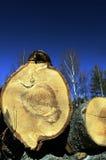 Derribado en los árboles forestales en un fondo del cielo Foto de archivo